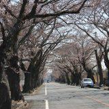 被災地の今:富岡町